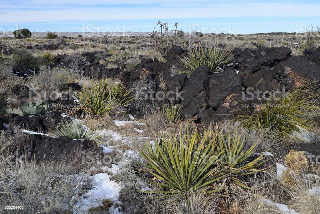 Desert Plants at Valley of Fires State Park stock photo