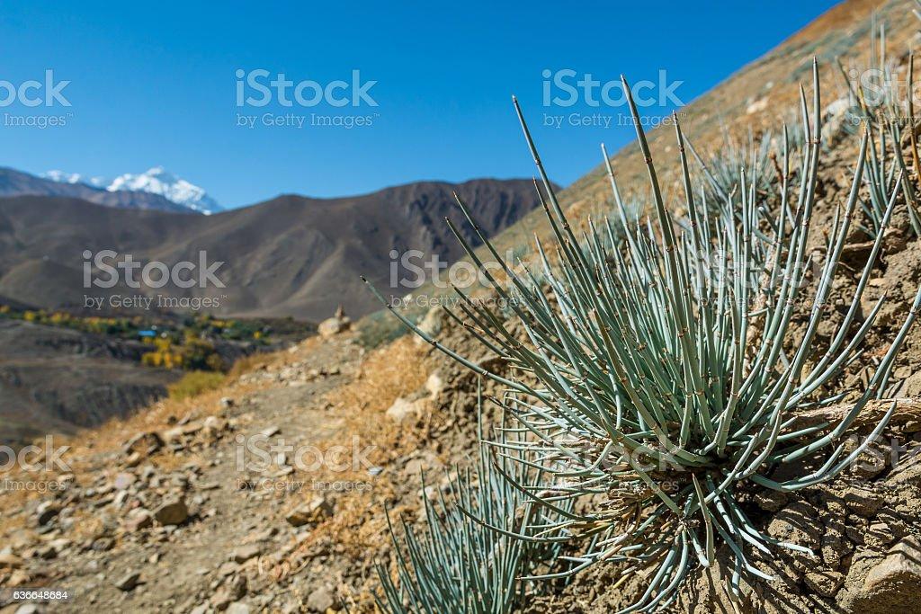 Desert plants growing in arid wastelands. stock photo