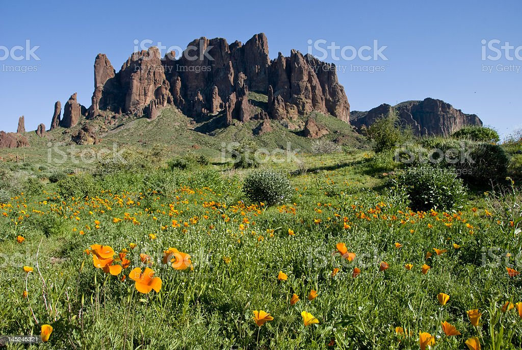 Desert Poppies Superstition Mountain stock photo