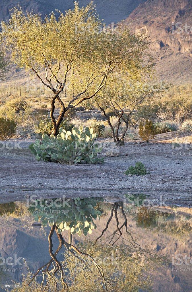 Desert Reflection royalty-free stock photo