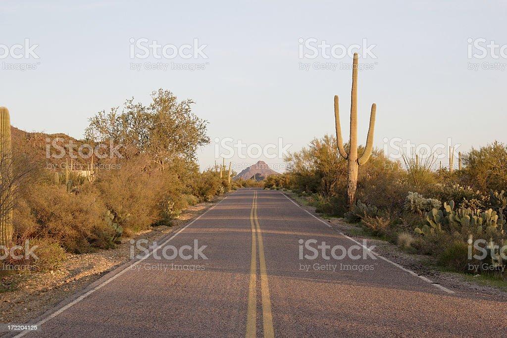 Desert Road and Cactus stock photo