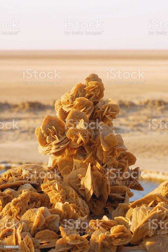 Desert roses stock photo