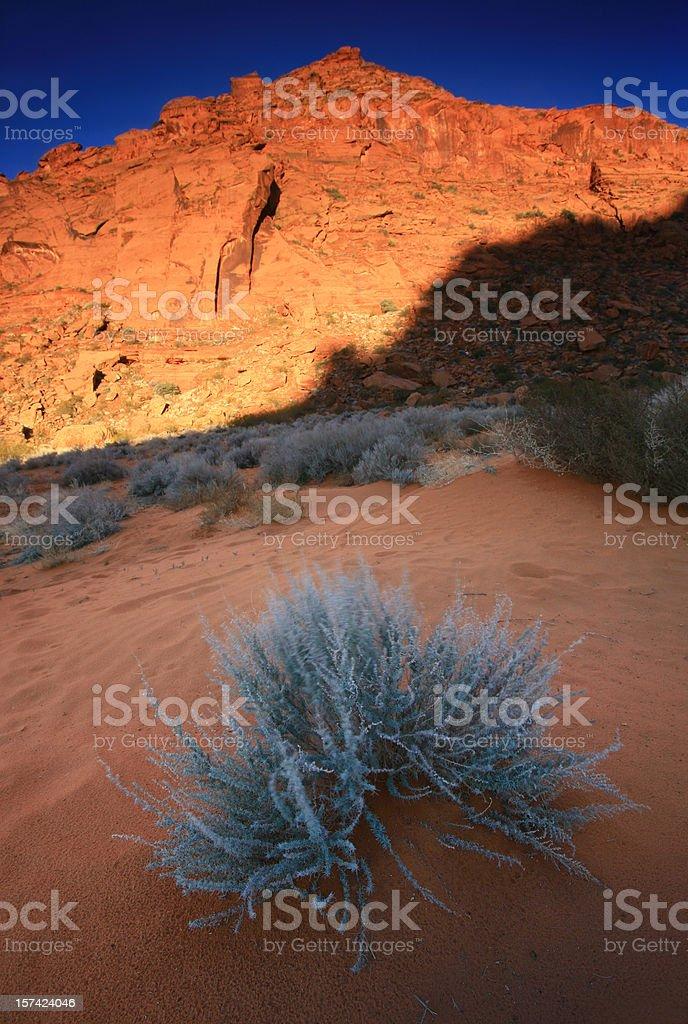 Desert Sage stock photo