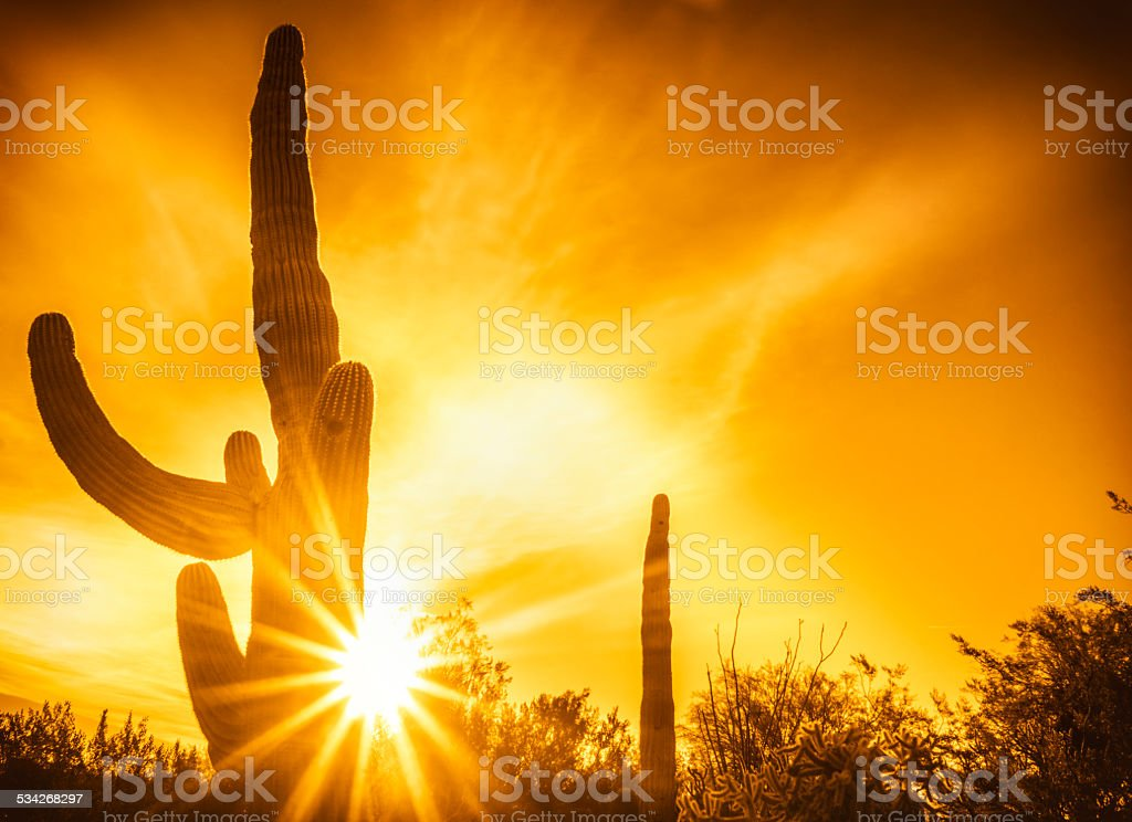 Desert saguaro cactus landscape sunset stock photo