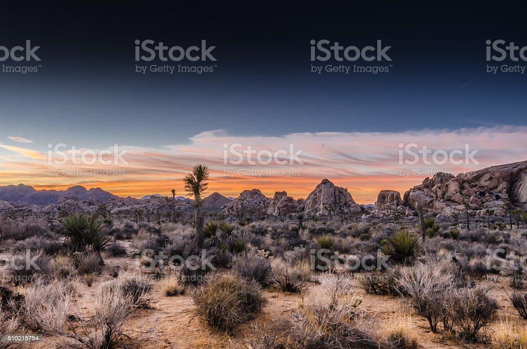 Desert Scene at Sunset stock photo