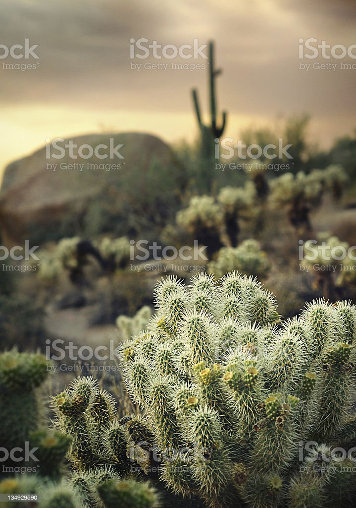 Desert scene north of Scottsdale,A stock photo