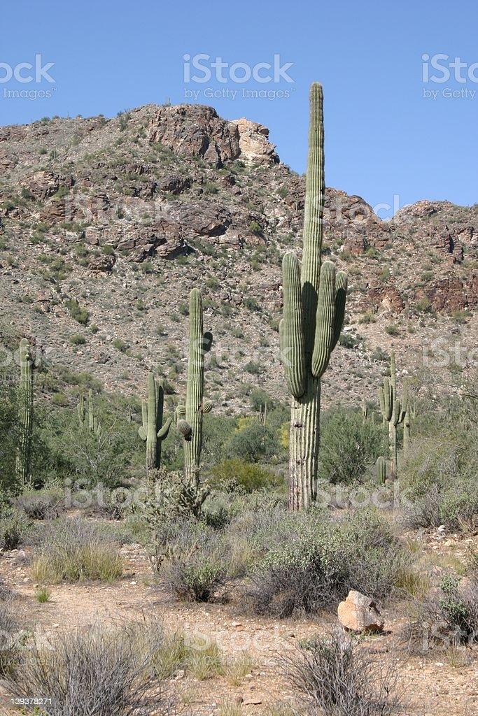 Desert Scene royalty-free stock photo