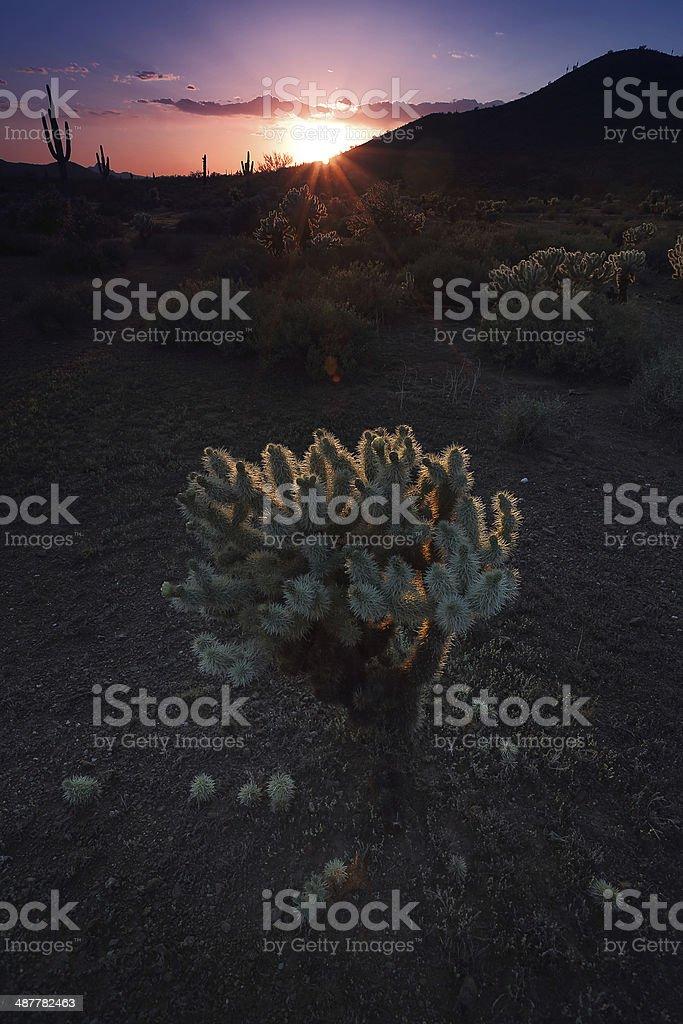 Desert Southwest Landscape royalty-free stock photo