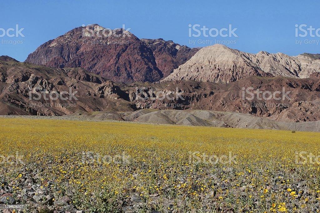 Desert Spring royalty-free stock photo