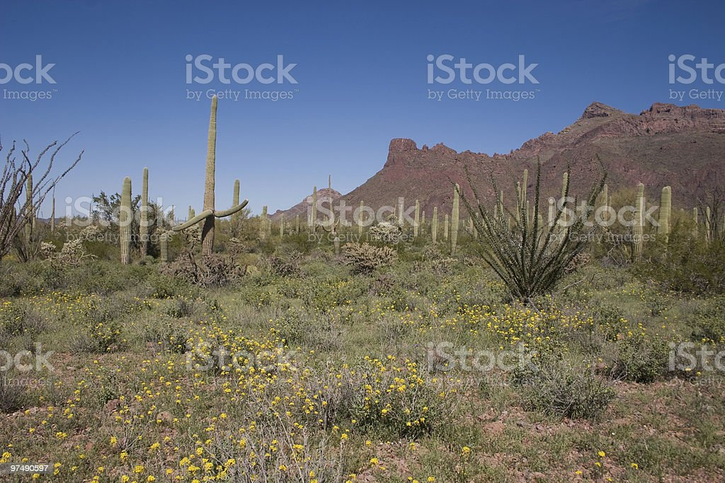 Desert Spring royalty-free stock photo