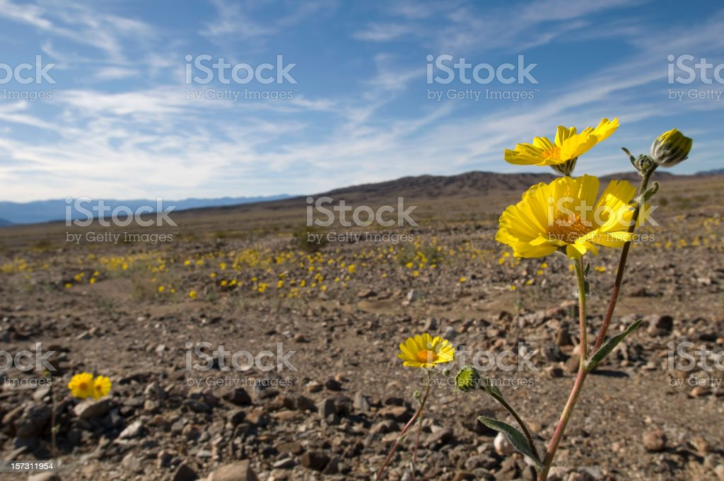 Desert Spring with Yellow Flowers stock photo