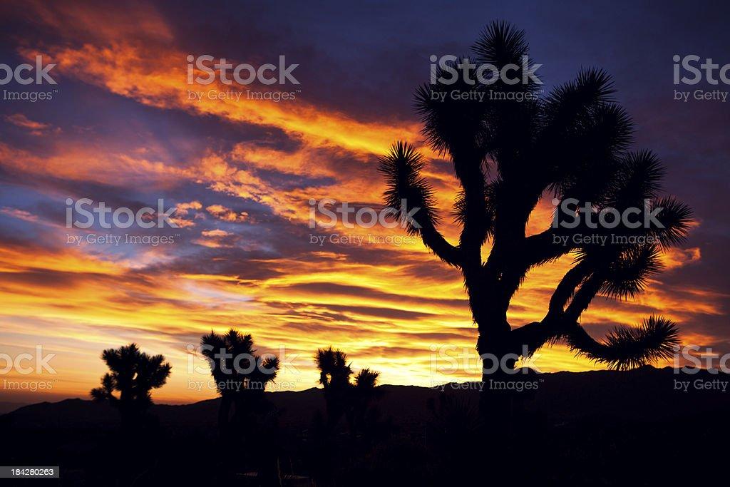 Desert Sun on Horizon at Joshua Tree stock photo