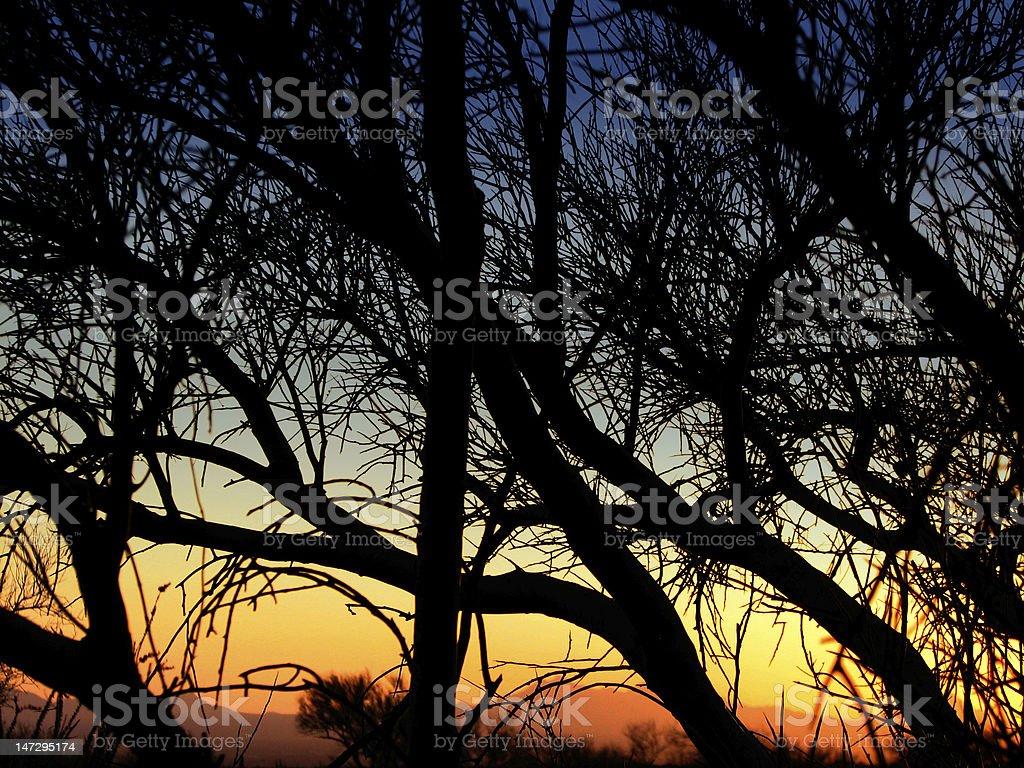 Desert Sunset Palo Verde Tree Silhouette royalty-free stock photo