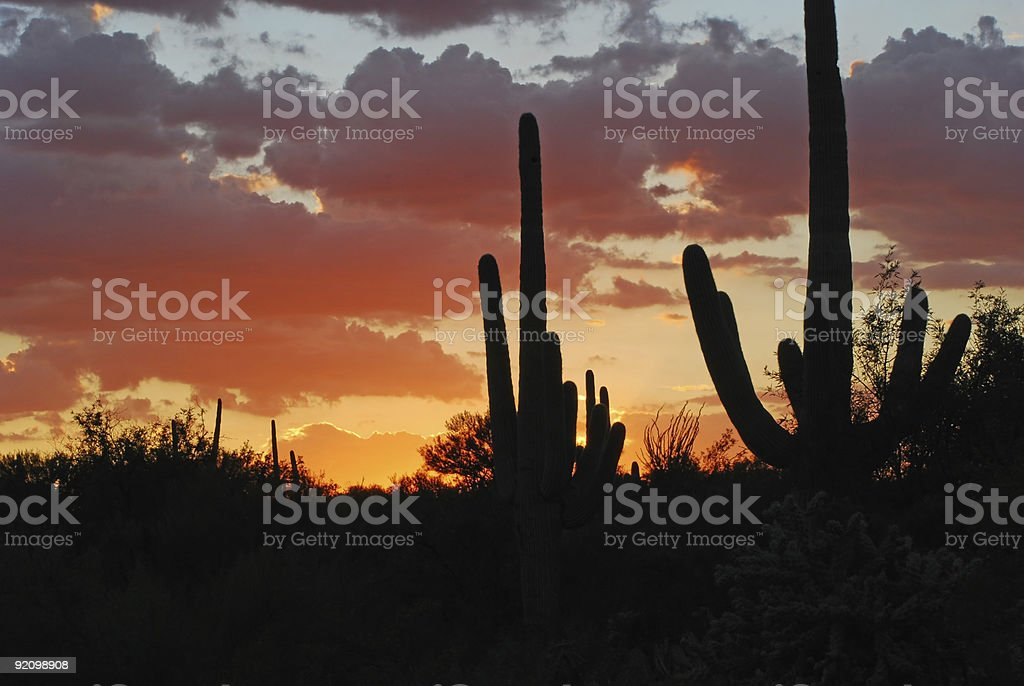Desert Sunset royalty-free stock photo