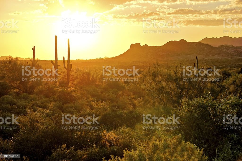Desert sunset view, Arizona, USA stock photo