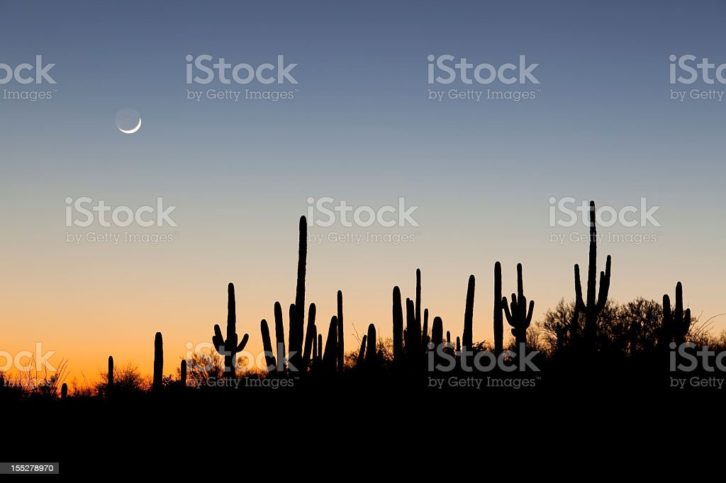 Desert sunset with cacti silhouettes royalty-free stock photo