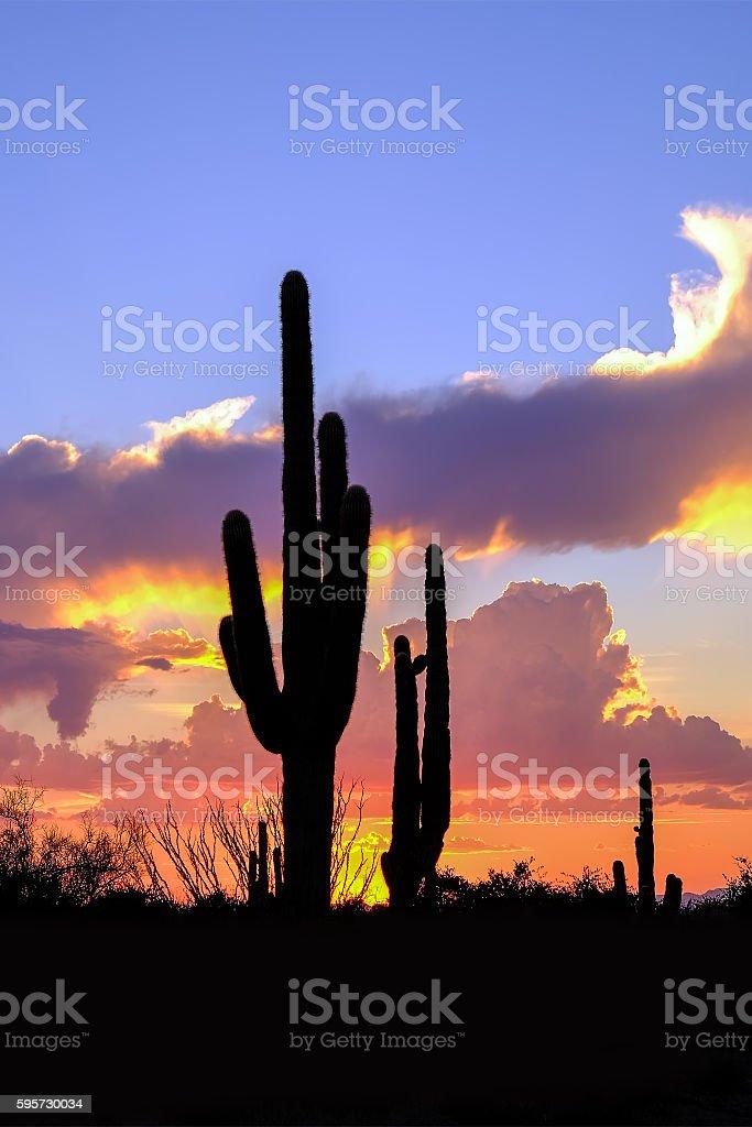 Desert Sunset-McDowell Sonoran Preserve. stock photo
