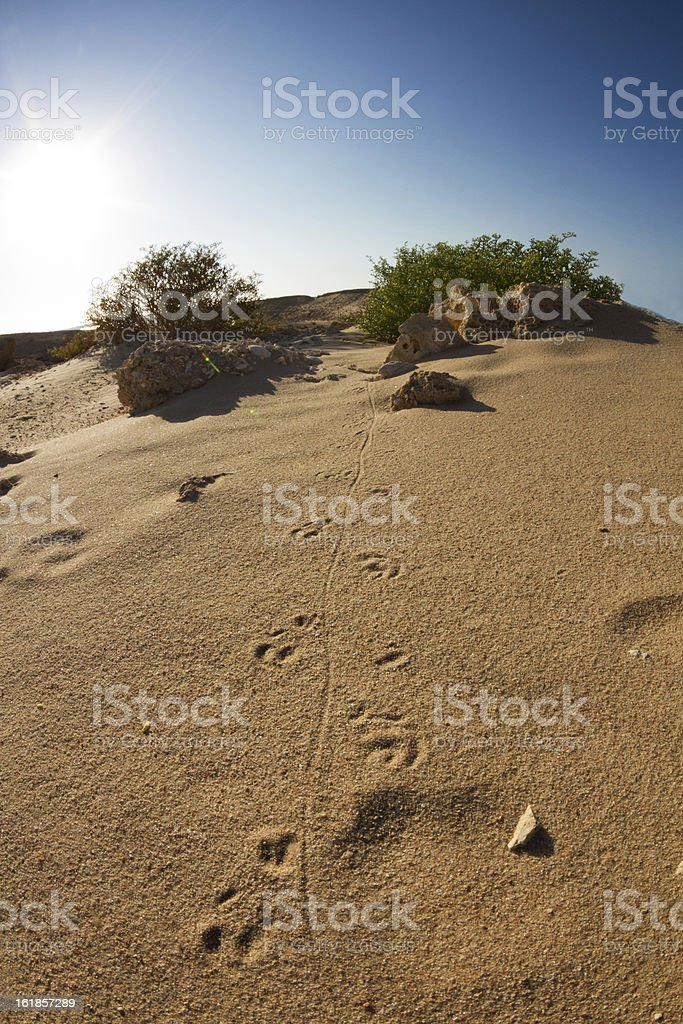 Desert Tracks royalty-free stock photo