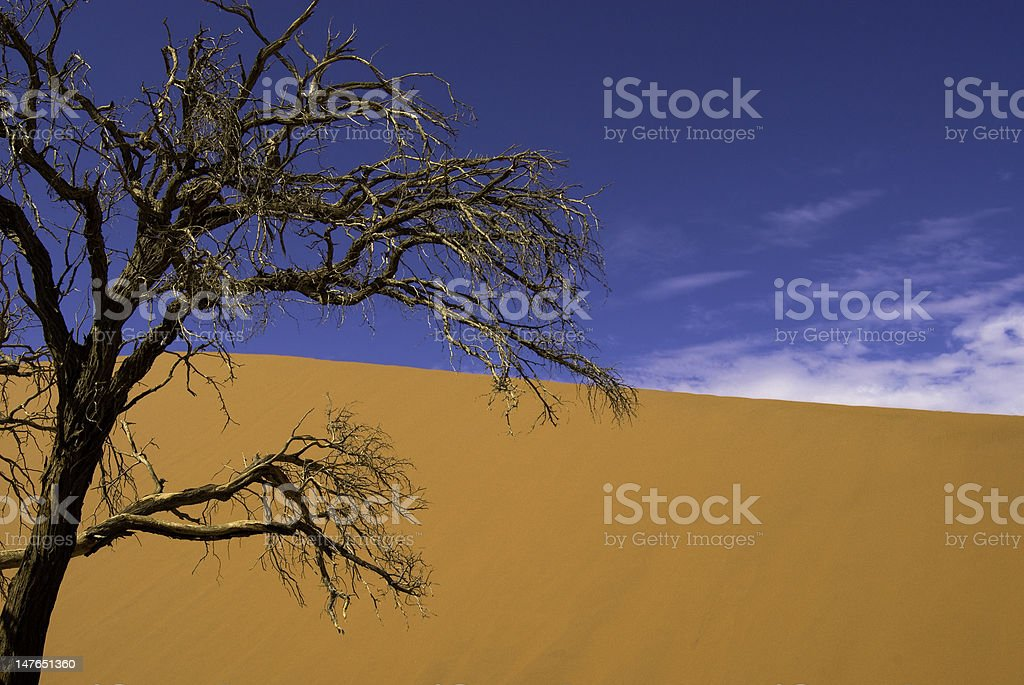 Desert Tree stock photo