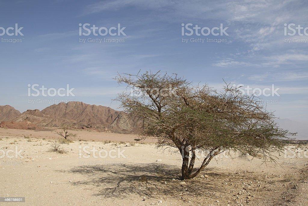 Desert tree stock photo