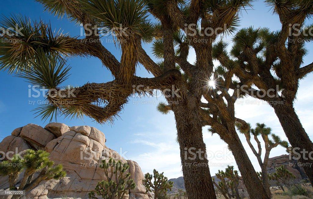 Desert trees stock photo