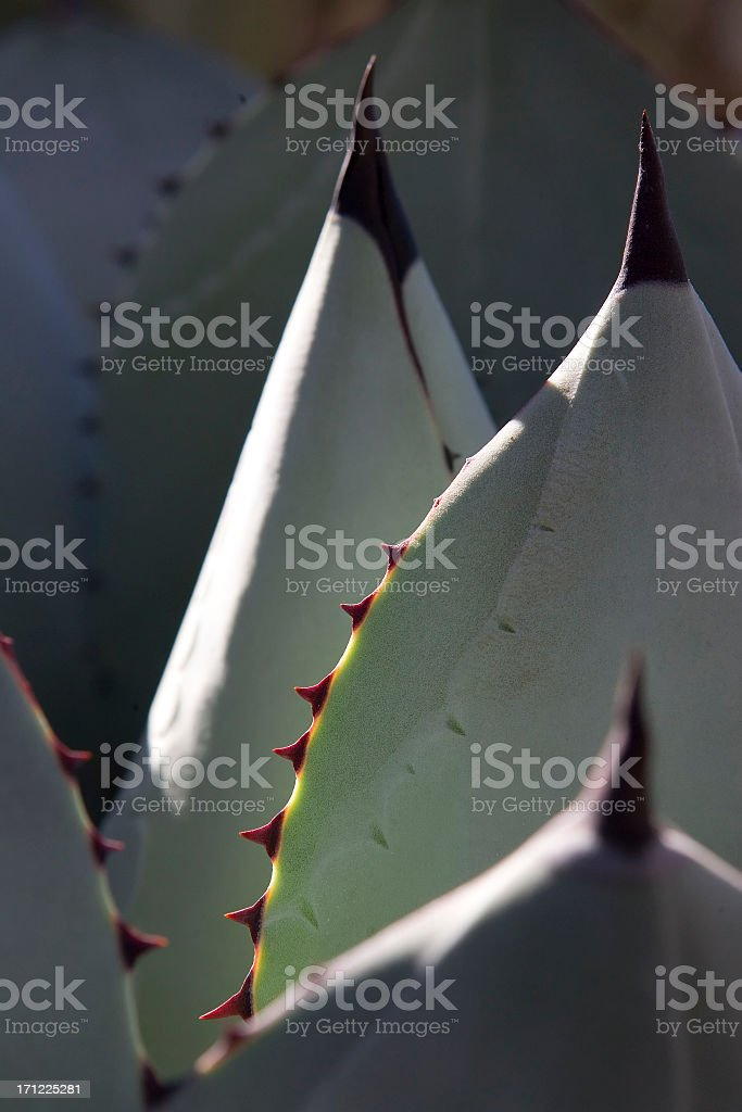 Desert Vegetation Abstract stock photo