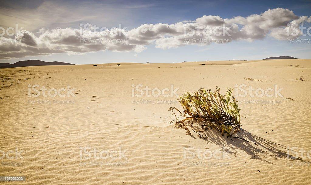 Die vegetation in der Wüste Lizenzfreies stock-foto