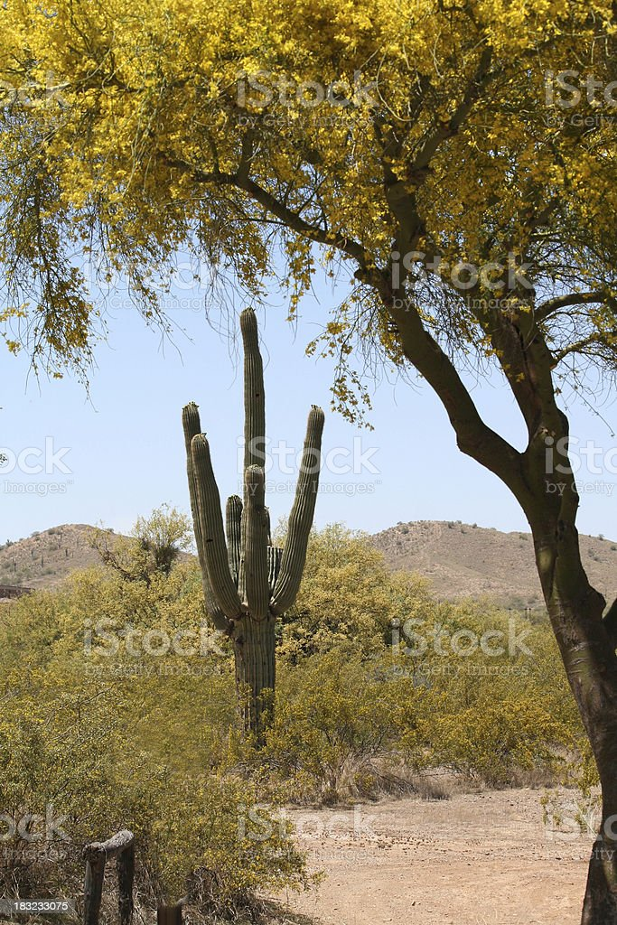Desert Yellows royalty-free stock photo