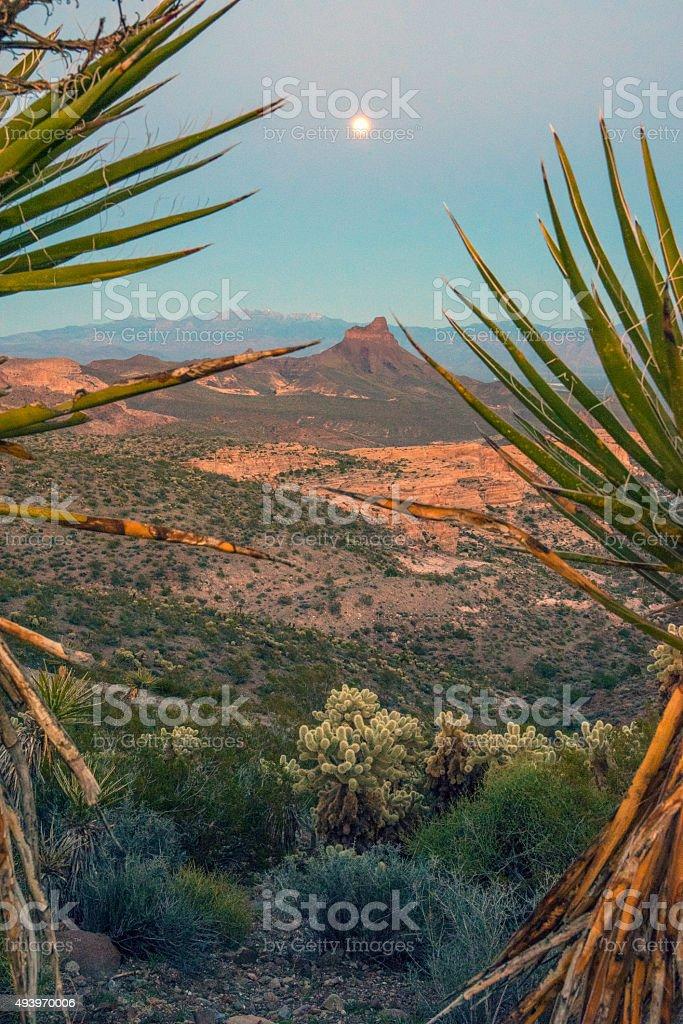 Desert yucca moon stock photo