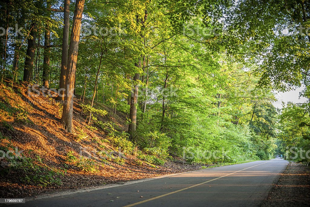 A deserted country road with old trees royalty-free stock photo