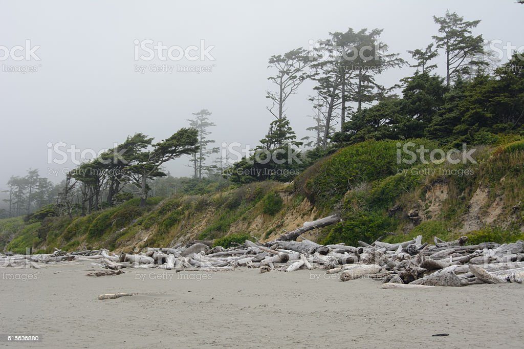 Deserted forest on the coast of the Pacific, California stock photo