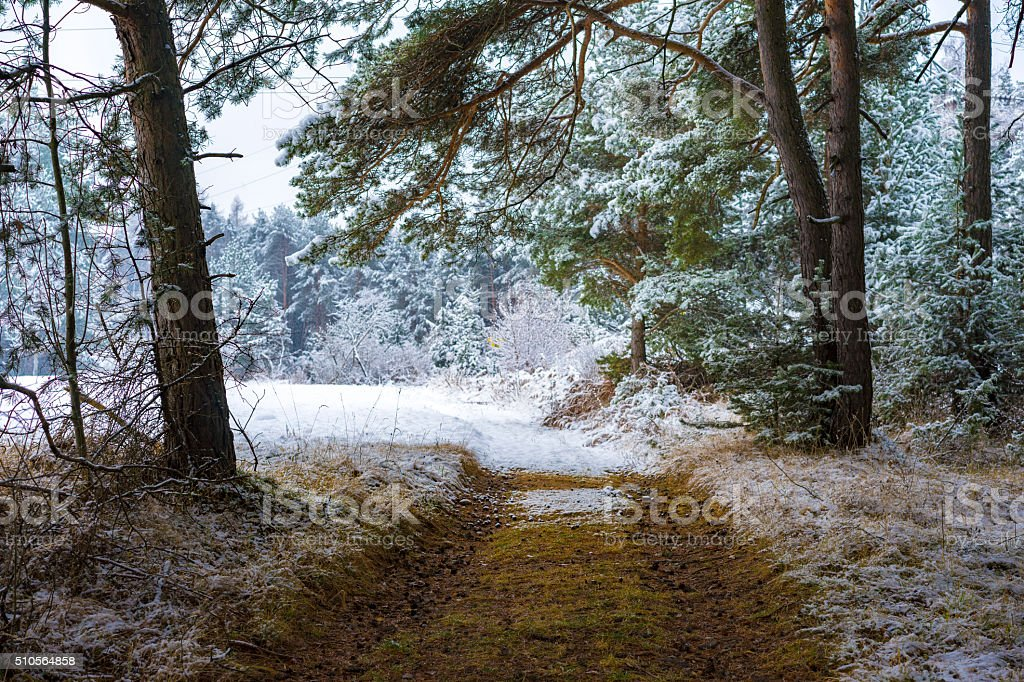 Deserted path through a snowy forest stock photo