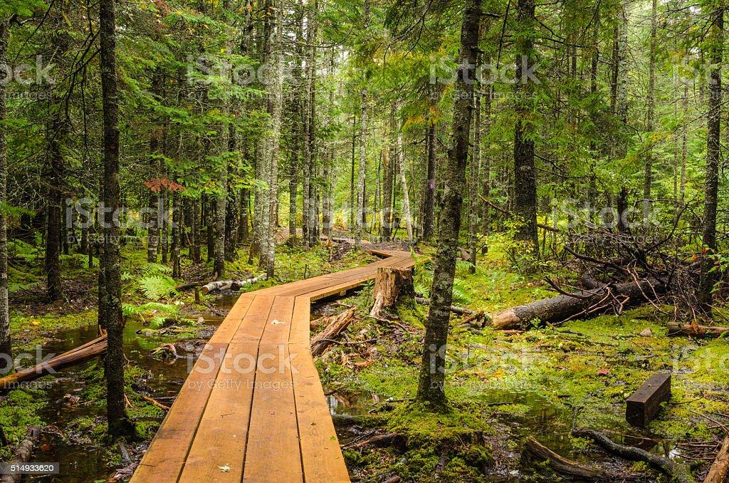 Deserted Winding Forest Walkway stock photo