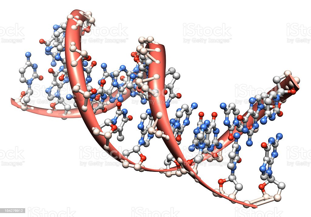 A design model of what a DNA molecule looks like  stock photo