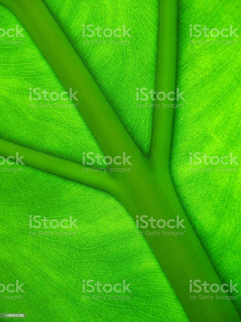 Design of leaf detail stock photo