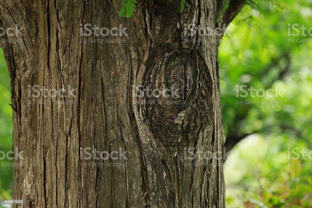 Diseño del árbol foto de stock libre de derechos
