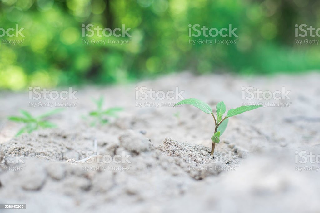 desolate area with few green plants coming to surface stock photo