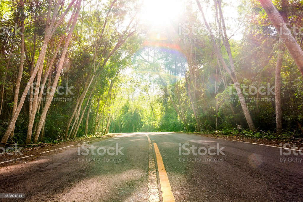 Desolate road in the forest with sun rays illumining. royalty-free stock photo