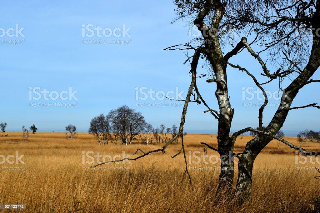 desolated tree stock photo
