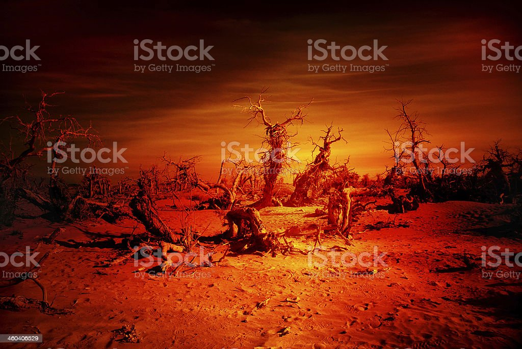 Destroy Forest / doomsday stock photo