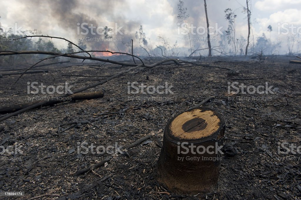 Destroy forest royalty-free stock photo