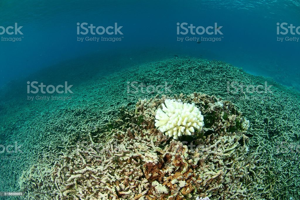 destroyed coral reef stock photo
