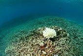 destroyed coral reef