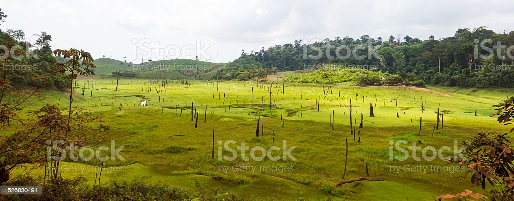 Destroyed tropical rainforest in Amazon, Brazil. stock photo
