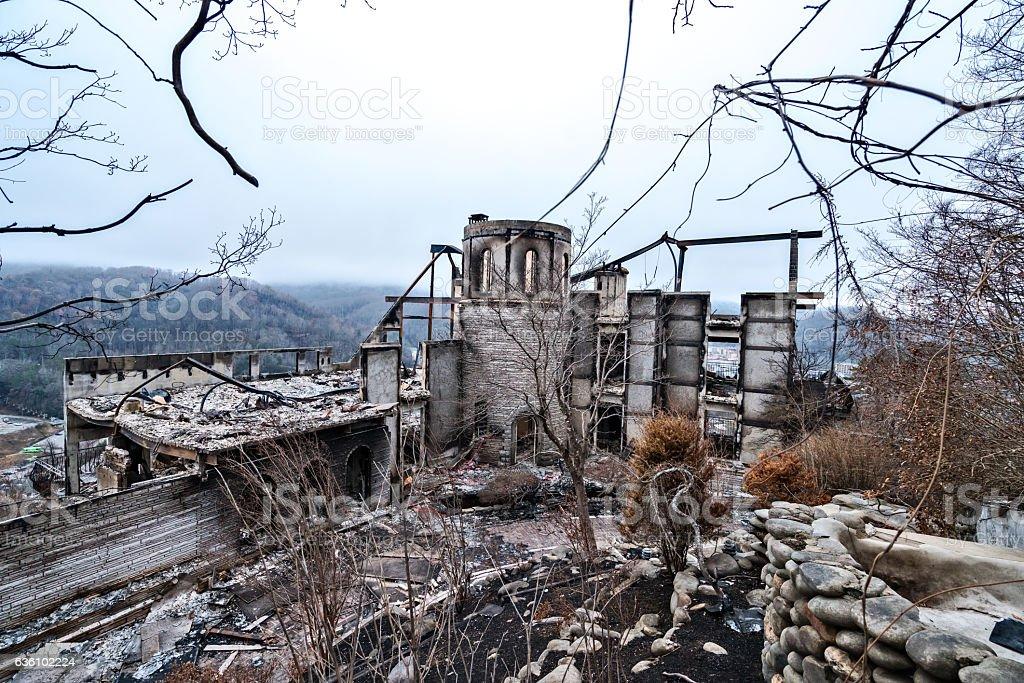 Destruction after forest fires stock photo