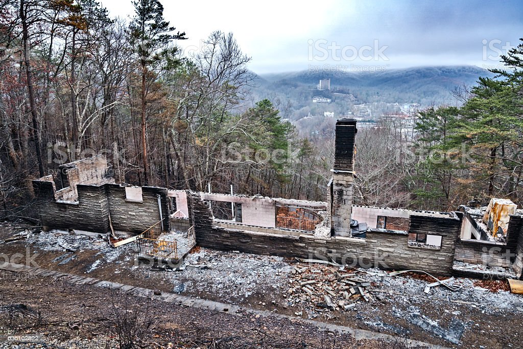 Destruction after forest fires stock photo