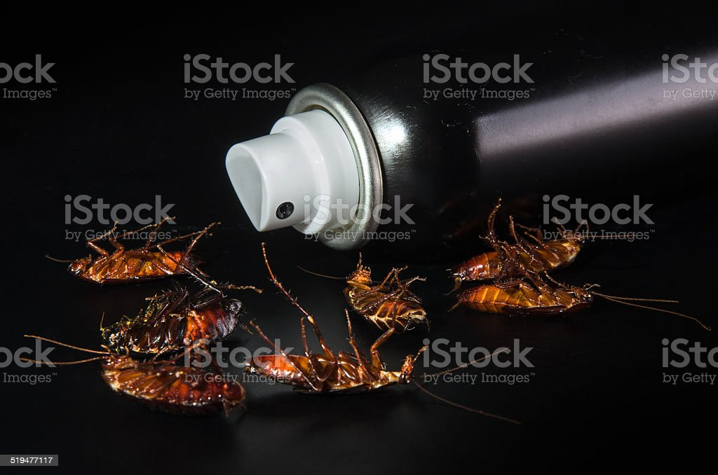 Destruction of black cockroaches. stock photo