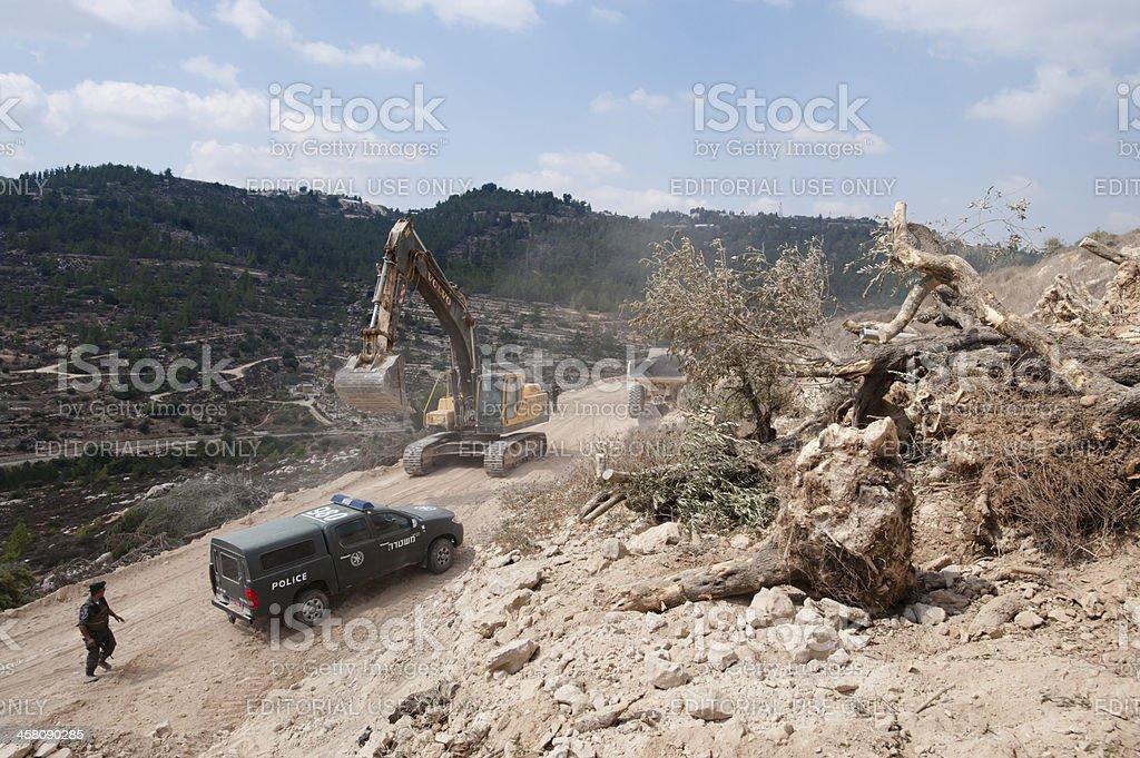 Destruction of Palestinian Olive Trees stock photo