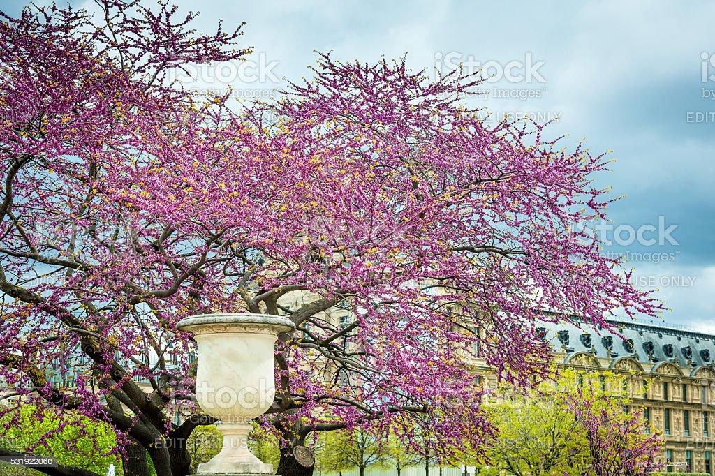 Detail in flowering park Louvre, Paris, France stock photo
