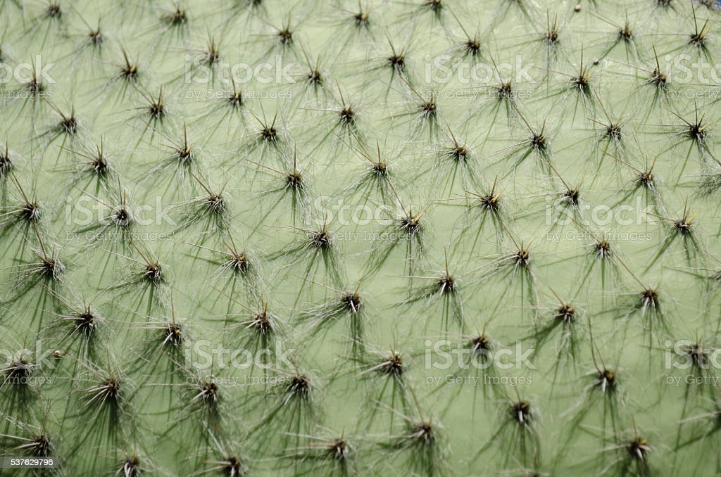 Detail of a cactus stock photo